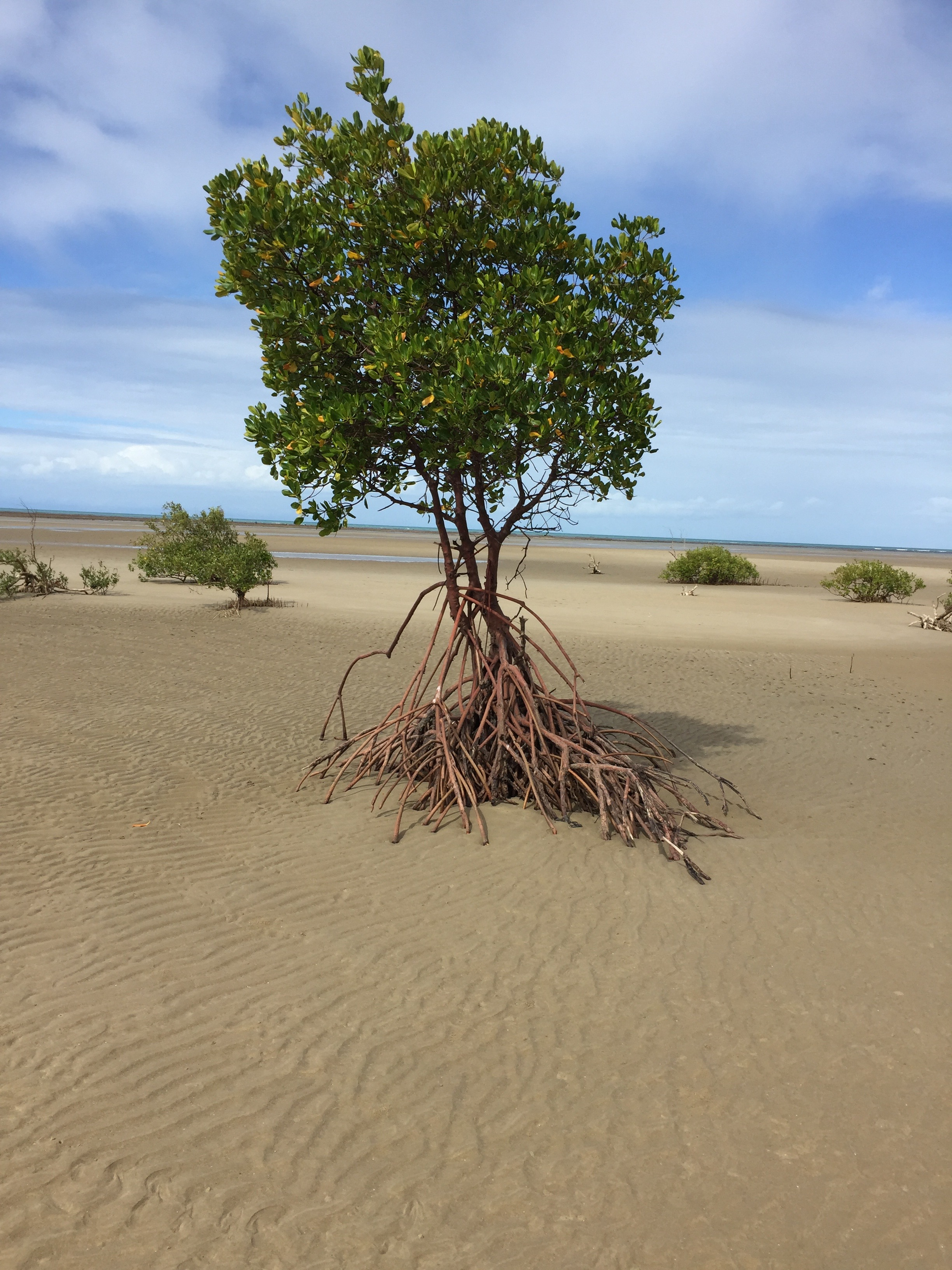 Mangroves 4 Mile Beach